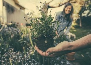3 Landscaping Tips for Better Drainage